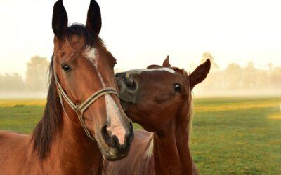 Passeggiate a cavallo in Monferrato
