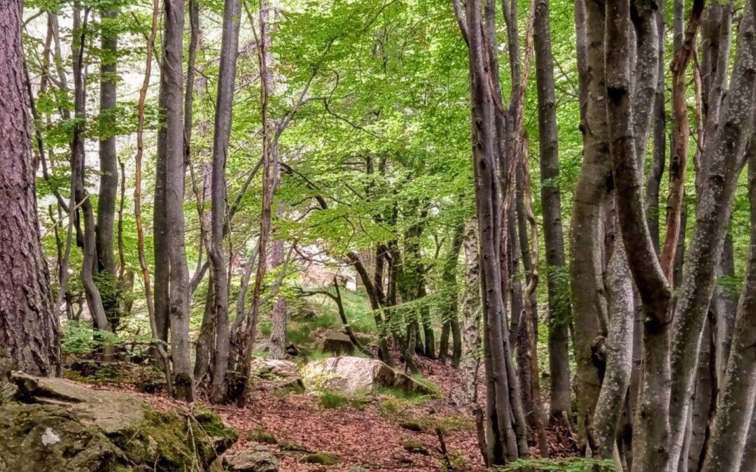 Magica Montagna: Sentieri e segreti al Colle del Lys
