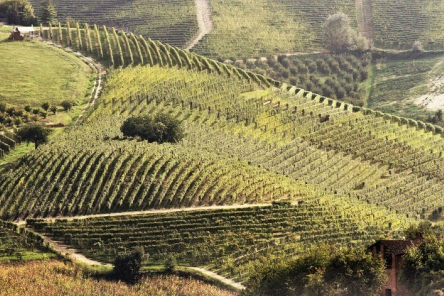 Welcome Piemonte, Experience, Langhe, Degustazione, Piemonte, visita guidata