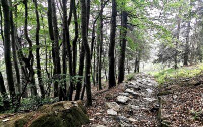 """Nel Parco del Colle del Lys, una """"gemma verde"""" alle porte di Torino"""