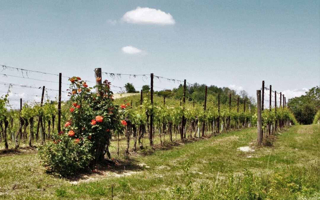 Wine Tour in Monferrato