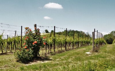 Wine Tour in Monferrato