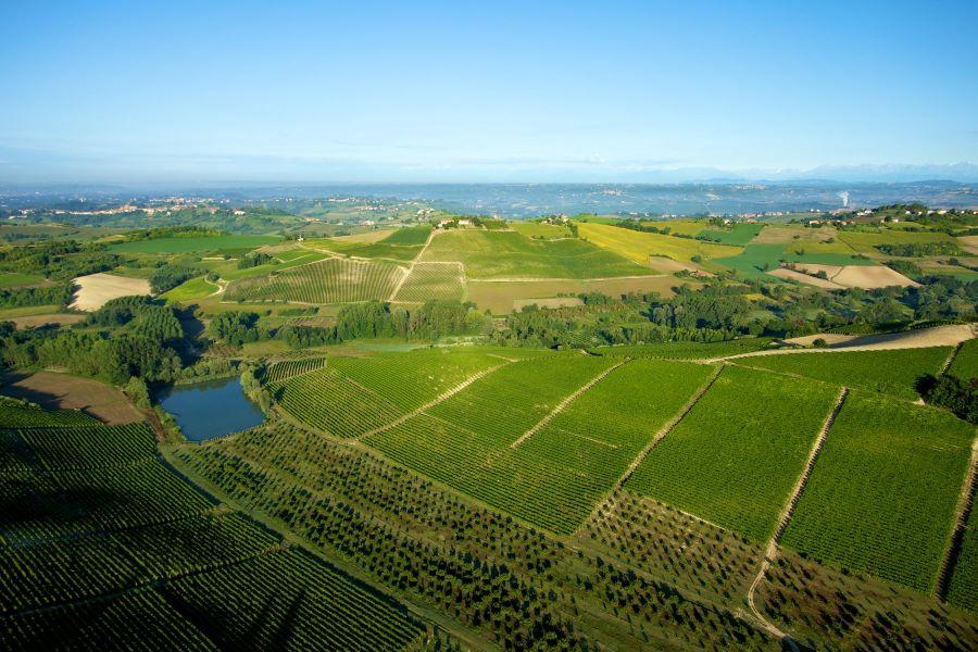 Welcome Piemonte, Vigne Azienda Montalbera, Experience, Monferrato, Piemonte