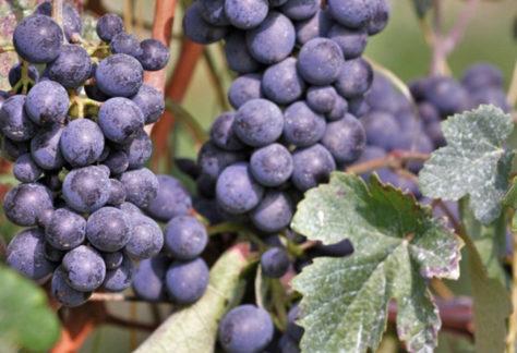 Wine Tour in Monferrato, Piemonte