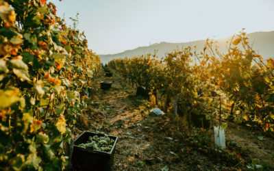 Azienda Agricola MATTEO SORIA WINERY