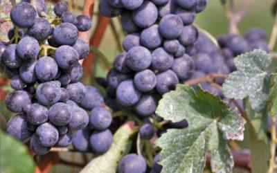 Wine Experience sulla Strada del Vino